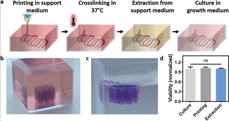 3D-bioprinting u shematskom prikazu i fotorekonstrukciji pojedinih faza procesa